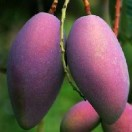 攀枝花水果