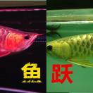 北京鱼跃水族