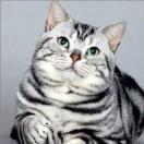 非典型猫咪