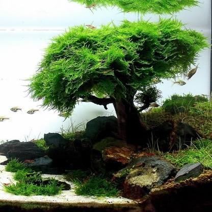 株洲森森水族头像图片