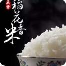 询稻有稻纯五常安家民乐稻花香米