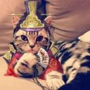猫眼看时尚