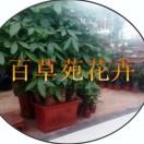 百草苑花卉