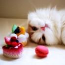馋猫微厨房