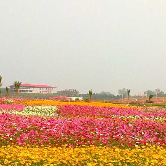 台湾花卉产业园