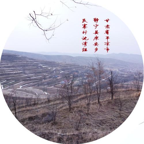 甘肃省静宁县原安乡民寨村沈湾组