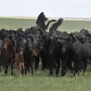 阿巴嘎旗农牧业局