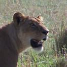 坦桑尼亚生态旅游