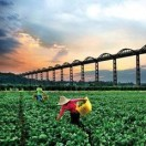 长沙乡村风景线