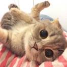 小猫的奇幻旅程