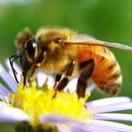 德生缘蜜蜂屋