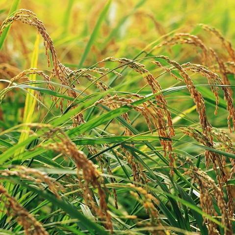 湖北省农业产业联盟