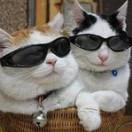 肥猫搞笑精选