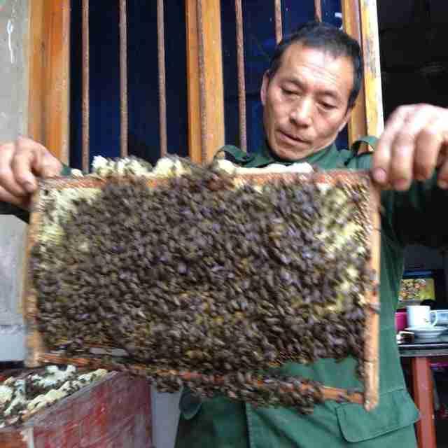 重庆市大足土蜂蜜