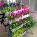 阳台蔬菜家庭绿植墙