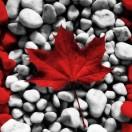 51加拿大留学