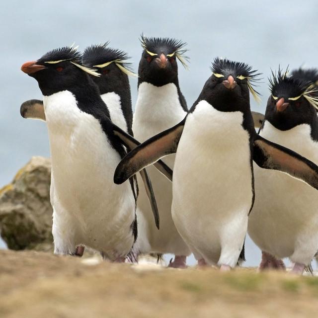 Ecología de los pinguinos