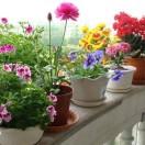 轻松教你学养花
