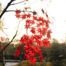 杭州园林植保