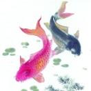 淄博市观赏鱼协会