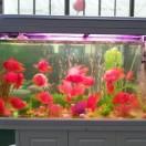鱼家水族馆