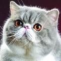 见一猫在银?#22411;?#31561;着主人取钱��姿势十分嚣张