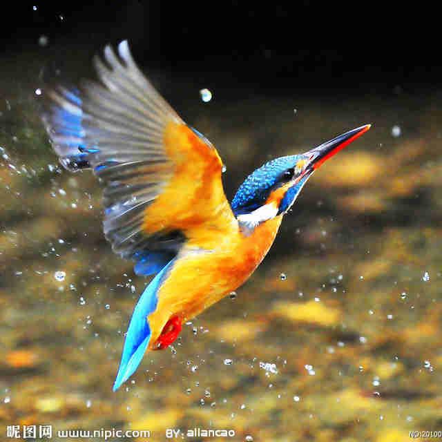 中国菜鸟头像图片