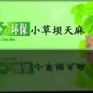 小芹菜天麻(小草坝)