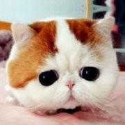 大爱猫咪控微信公众号二维码