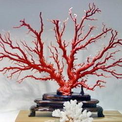 台湾红珊瑚台中馆