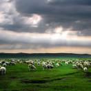 白绵羊户外旅行网