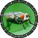 中国苍蝇网