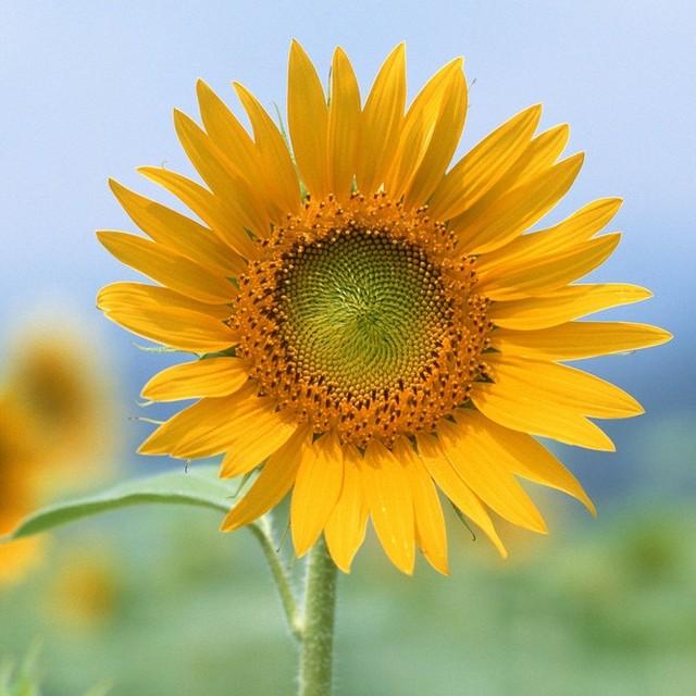 大连向日葵庄园头像图片
