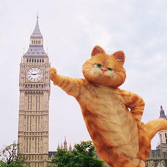 dba流浪猫