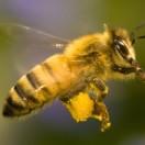 农家蜂蜜在线