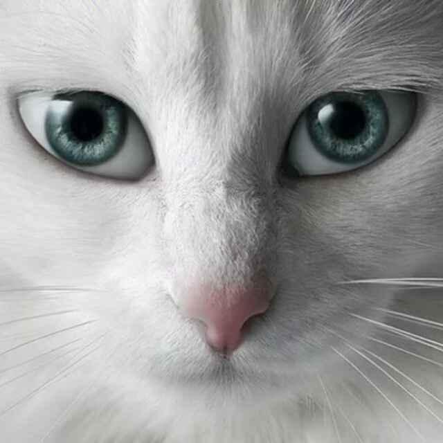 搞笑图片,搞笑,猫,猫咪图片,猫咪,宠物,老陈头,猫叫模拟器