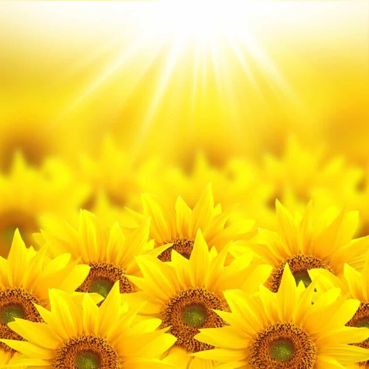 灿烂的阳光