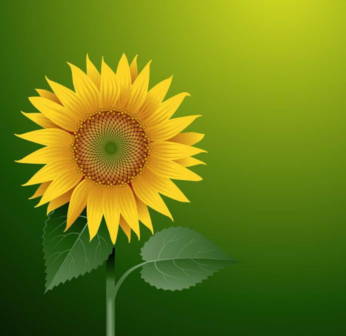 ?太阳花蕊