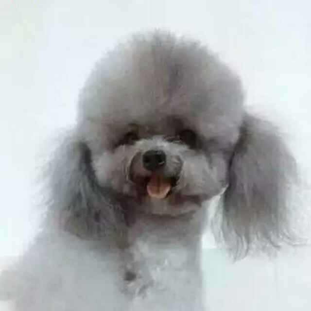 o_o爱dog