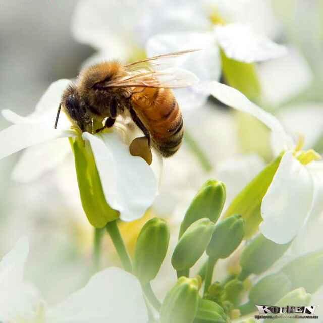 Avatar - 蜜蜂