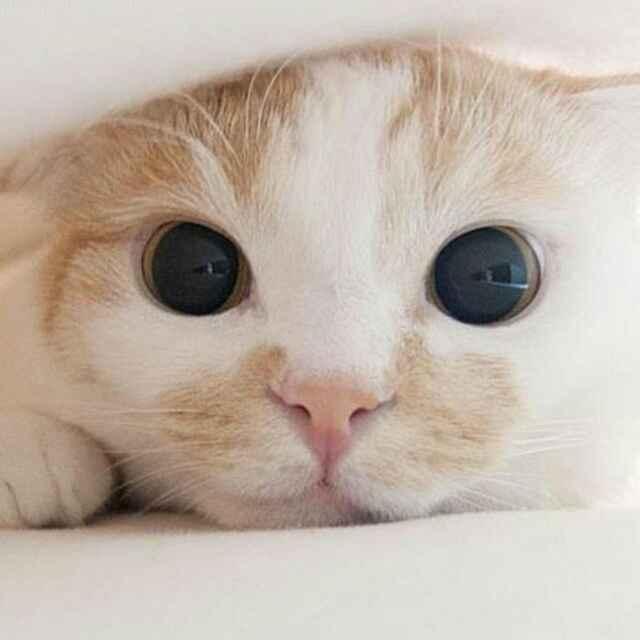 可爱的微信动物头像