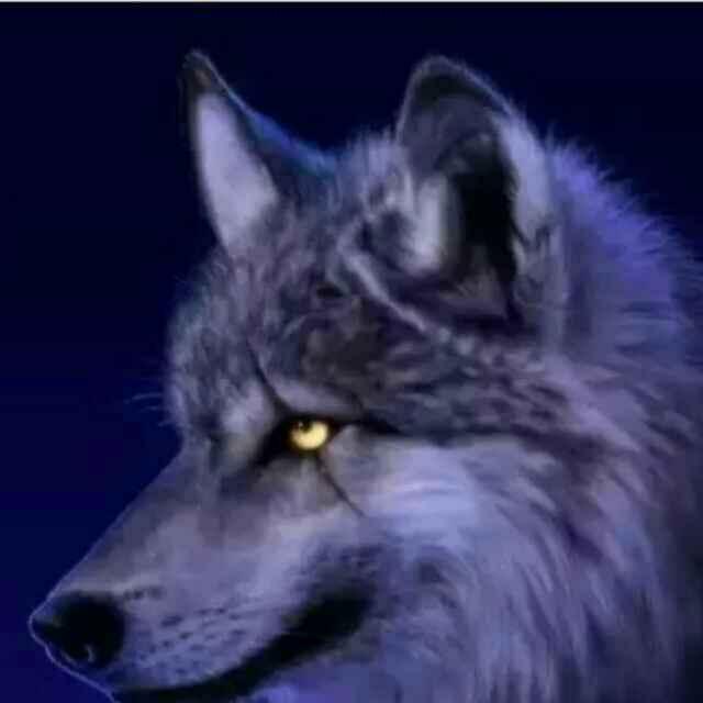 来自北方的狼