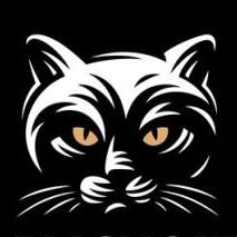 黑猫信息流