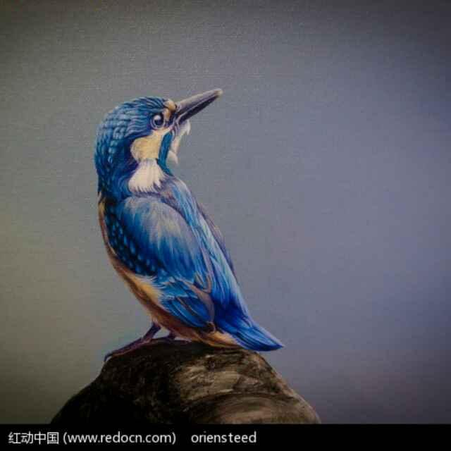 平凡的小鸟