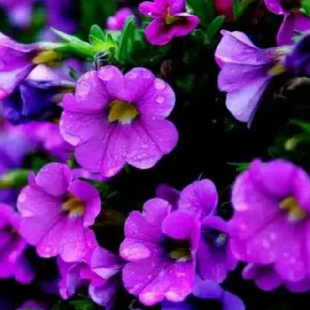 春雨97455