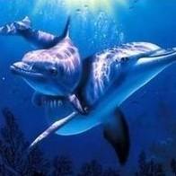 心灵海豚湾